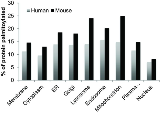 Percentage of human and mouse S-palmitoylation hits in cellular compartments.