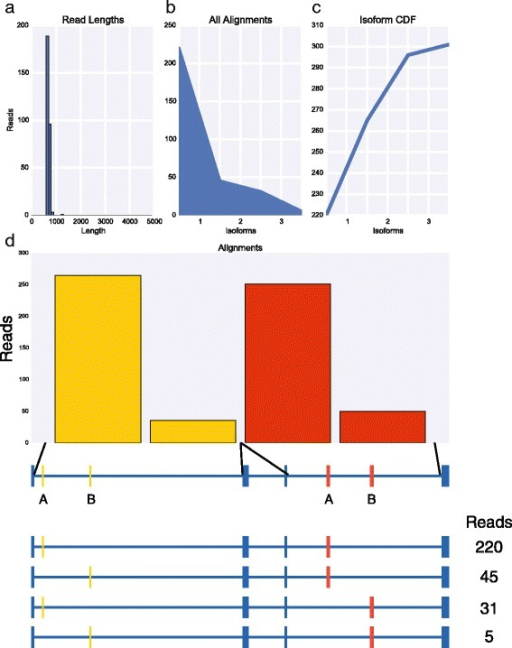 MinION sequencing of Rdl identified four isoforms. a Histogram of read lengths. b The number of reads per isoform. c Cumulative distribution of isoforms with respect to expression. d The number of reads per alternative exon (top) and per isoform (below)