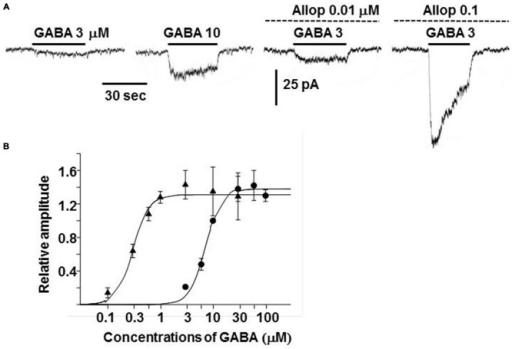 Enhancement of GABAA receptor channel activity by allopregnanolone. (A) Whole-cell currents recorded from a dissociated guinea-pig chromaffin cell at −60 mV. The traces were obtained from the same cell. GABA at 3 or 10 μM was bath applied during the indicated period (bars) in the absence and presence of 0.01 or 0.1 μM allopregnanolone (interrupted lines). (B) Dose-response curves for GABA-induced currents at the plateau level in the absence (•) and presence (▴) of 0.1 μM allopregnanolone. The lines show fits of logistic equations with IMaxs of 1.38 and 1.31, slope factors of 2.88 and 2.83, and EC50s of 7.2 and 0.3 μM in the absence and presence of allopregnanolone, respectively. Plateau amplitudes of GABA-induced currents are expressed as fractions of those of 10 μM GABA currents in the same cells. The data represent mean ± SEM. (A,B) Are reproduced from Inoue et al. (2013).