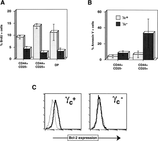 Altered survival and proliferation of early thymocyte precursors in the  absence of γc. (A) Abnormal BrdU incorporation in γc− thymocytes. Mice received a  single pulse of BrdU before killing. Indicated thymocyte subsets were sorted, and  percentages of cells incorporating BrdU  were analyzed. (B) Annexin V staining of  γc+ or γc− thymocyte subsets. Cells were  stained for TN cells (see Fig. 1), CD25, and  Annexin V. Propidium iodide–negative  CD25− and CD25+ TN cells were electronically gated, and percentages of Annexin V–positive cells were calculated  (mean ± SD) from four mice of each genotype. (C) Intracellular Bcl-2 staining of DN  thymocyte precursors was performed; γc−  thymocytes demonstrated severely reduced  Bcl-2 levels (thick lines). Thin lines, isotype  control staining.