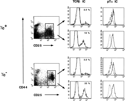 Intracellular expression of pTα and TCR-β chain in  CD25+ thymocyte precursors.  Thymocytes from γc+ or γc−  mice were surface stained for TN  cells (see Fig. 1), CD44, and  CD25, fixed, and permeabilized  with saponin before detection of  intracellular (IC) TCR-β or pTα  chains. Gated CD44+CD25+ and  CD44−CD25+ thymocyte subsets are boxed. Negative controls  (dotted lines) are staining of thymocytes from RAG-2–deficient  (for TCR-β) or pTα-deficient  (for pTα) mice.