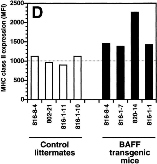 Increased B cell numbers in BAFF-Tg mice. (A) Increased lymphocyte counts in BAFF-Tg mice. The graph compares 12 control littermates (left) with 12 BAFF-Tg mice (right). Lymphocyte counts (○) and granulocytes (including neutrophils, eosinophils, basophils; ⋄) are shown. (B) Increased proportion of B cells in PBL from BAFF-Tg mice. PBL were stained with both anti–B220-FITC and anti–CD4-PE for FACS® analysis and gated on live cells using the forward and side scatter profile. Percentages of CD4- and B220-positive cells are indicated. One control mouse (left) and two BAFF-Tg mice (right) are shown and the results were representative of seven animals analyzed in each group. (C) FACS® analysis of the ratio of B to T cells in PBL. The difference between control animals and BAFF-Tg mice in A and C was statistically significant (P < 0.001). (D) Increased MHC class II expression on B cells from BAFF-Tg mice PBL. MHC class II expression was analyzed by FACS®. (E) Increased Bcl-2 expression in B cells from BAFF-Tg mice PBL. Bcl-2 expression was measured by intracytoplasmic staining and cells were analyzed by FACS®. In both D and E, B220-positive cells were gated. Four control littermates (white bars) and four BAFF-Tg mice are shown and are representative of at least 12 animals analyzed for each group. MFI, mean of fluorescence intensity. The dotted line represents the average MFI for the control animals. The difference between control animals and BAFF-Tg mice was statistically significant (P < 0.005). (F) Increased expression of effector T cells in BAFF-Tg mice. PBL were stained with anti–CD4-CyChrome™, anti–CD44-FITC and anti–l-selectin-PE. Shown are CD4+-gated cells. Percentages of CD44hi/l-selectinlo cells are indicated. One control mouse (left) and two BAFF-Tg mice (right) are shown and the results were representative of eight animals analyzed in each group.