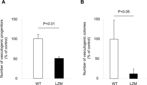 Number of spleen-derived early vasculogenic progenitor cells (A) and vasculogenic colonies (B) in LZM and WT mice (n≥9).