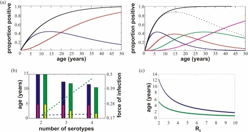 Comparison of age structured dynamics between model (i) and model (ii).(a) The lines show the proportion of the population at each age (for model (i) (top) and model (ii) (bottom)) who have suffered one (solid dark blue line), two (solid red), three (solid green), four (solid magenta) and any (solid black) dengue infections. For model (ii) the proportion of the population that is at risk of disease (defined as having seen 1, 2 or 3 serotypes) is also plotted (dotted black) for comparison to the equivalent in model (i) (solid dark blue). Generally, in model (ii) people are exposed to dengue at an earlier age, experience heterologous infections younger, and take much longer to become completely immune. (b) For model (i) ((ii)), the blue (green) bar shows how the average age of disease (DHF), determined as heterologous infection, changes with the number of serotypes present whilst the small bars show the change in age of first infection. The increase in the total force of infection with the number of serotypes is shown as dotted lines (model (i): blue, and model (ii): green). (c) For model (i) (blue line) and model (ii) (green line) we observe that increasing  acts to decrease the average age of first infection (here estimated as 1/total force of infection) and that for all levels of  this value is significantly lower when allowing for third and fourth infection (model (ii)). Parameter values:  ((a), (b) and (c)) and  (a),  (b).