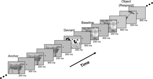 "fMRI adaptation paradigm and task. One adaptation or ""anchor"" animal picture was presented several times in a row (3–7 times) at a rate of once per second (picture duration = 200 ms, crosshair duration = 800 ms). Immediately following the repeated anchor picture, a single ""deviant"" animal picture was presented, drawn from 1 of 5 levels of conceptual distance from the anchor. Adaptation sequences were intermixed randomly with phase-scrambled baseline pictures and pictures of man-made objects. Subjects were instructed to press a response button to pictures of man-made objects but were asked to attend to all pictures."