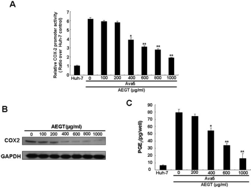 AEGT inhibitory effect on HCV-induced COX-2 promoter-linked reporter, protein expression and enzymatic activity.(A) Concentration-dependent reduction of COX-2 promoter-linked luciferase activity in AEGT-treated HCV replicon cells. Ava5 cells were transfected with the reporter plasmid pCOX-2-Luc and treated with indicated concentrations of AEGT for 3 days. Cell lysates were prepared for luminescence detection using the Steady-Glo Luciferase Assay Kit (Promega). The Huh-7 cells, transfected with pCOX-2-Luc without AEGT treatment, served as the basal level of COX-2 promoter activity, which is defined as 1. (B) Concentration-dependent COX-2 reduction of AEGT-treated HCV replicon cells. Ava5 cells were treated with AEGT for 3 days at the indicated concentrations. Cell lysates were prepared, and equal amounts of protein extracts (40 µg) were subjected to Western blot analysis with anti-COX-2 and anti-GAPDH (a loading control) antibodies. (C) AEGT inhibitory effect on PGE2 production. After 3 days of treatment, the intercellular PGE2 levels were analysed using the Biotrak PGE2 enzyme immunoassay system (Amersham). Non-treated Huh-7 cells served as the control. Each value represents the mean ± SD of three independent experiments. *P<0.05; ** P<0.01.