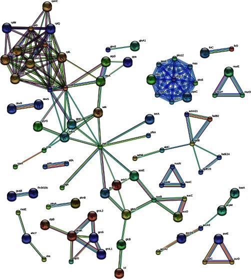 Protein-protein interaction networks of the M. tuberculosis ATPome. The list of protein IDs from our MS analysis was input into the STRING database (STRING version 9.0) to identify known and predicted functional networks. 48% of the proteins in our shotgun analysis were shown to be functionally associated with at least one known interacting partner. Emerging protein clusters are functionally relevant in basic metabolism (i.e. respiratory chain and protein synthesis), cell wall biosynthesis (i.e. fatty acid and peptidoglycan synthesis), and virulence (i.e. lipid synthesis).