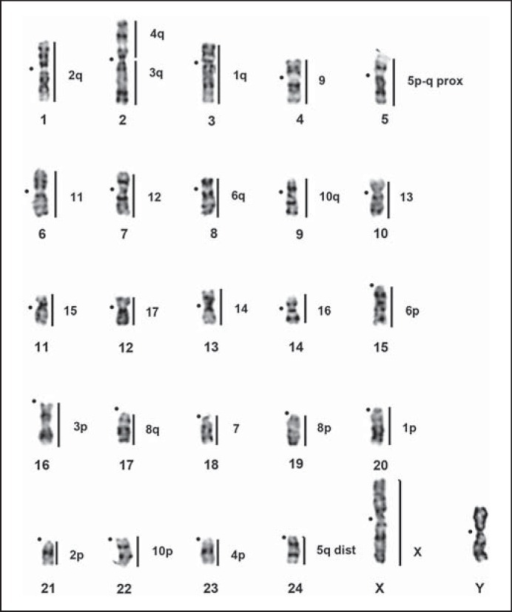 how to read karyotype results