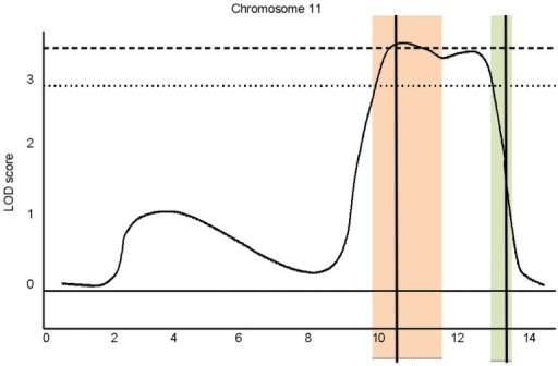 Schematic representation of the lncov1 and lncov2 gene positions in the chromosome 11 region containing a QTL for transgressive ovary size in workers.The dotted and dashed LOD score lines represent the 95% and 99% QTL thresholds, respectively, above which ovariole number is significantly influenced [4], [6]. The orange bar indicates the location of Group 11.31 scaffold and the green one the Group 11.35 scaffold (genome version 4.0). Black vertical lines indicate the respective positions of lncov1 and lncov2 within these scaffolds.