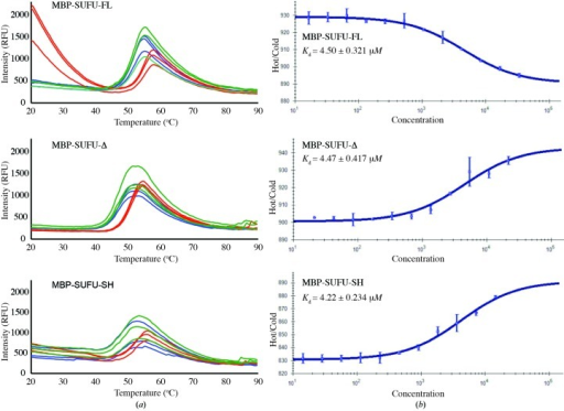 The SUFU IDR has distinct structural properties. (a) Thermal stability assays of MBP-SUFU constructs performed in triplicate, either alone (blue) or with GLI1p (red) or GLI1p-SH (green). All constructs bind to GLI1p; however, MBP-SUFU-FL has different physical properties upon initial GLI1p binding, as shown by the marked increase in fluorescence. (b) Microscale thermophoresis experiments with FAM-GLI1p and titrated MBP-SUFU constructs, showing an average of three separate experiments. All proteins have similar affinity, but the thermophoretic properties of FAM-GLI1p are modified differently between the MBP-SUFU-FL construct and the MBP-SUFU-Δ and MBP-SUFU-SH constructs, reflecting a difference in shape.
