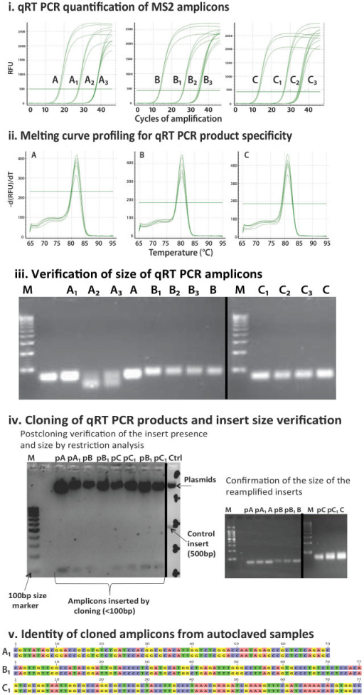 "Quantification and quality control steps for three amplicons that were consistently recovered after repeated autoclaving.(A), (B) and (C) indicate amplicons commonly employed as indicator sequences for the presence and quantification of MS2 coliphage7. Numeric subscripts indicate the number of autoclave cycles (e.g. A1, B1, C1). If no numeric subscript is present then the capital letter indicates results obtained from non-autoclaved positive controls. 1.i. The horizontal line represents the threshold Cq 40. The quantification cycles of A2 & A3, B2 & B3 and C2 & C3 are overlapping. 1.iv. Plasmid extracts are indicated by the subscript ""p"" (e.g. pA1, pB1, pC1). 1.v. is a paired comparison of A1, B1, C1 (bottom sequence in each pair) to A, B, C (top sequence in each pair). The first two pairs are sequenced in the 3′-5′ direction and the third pair in the 5′-3′ direction. The gels shown in this image have been cropped for convenience. The borders between separate gels have been marked with a black line."