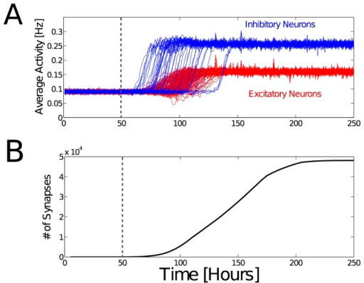 Homeostatic adaptation of neuronal firing rates during establishment of synaptic connectivity.(A) Synaptic scaling during neurite outgrowth leads to robust average activities of both excitatory (red) and inhibitory (blue) neurons. The network consists of 250 neurons that are randomly arranged in 3D space. The horizontal axis indicates the estimated real-time when taking into account that the time constant of synaptic scaling is in the order of several hours [17]. At  (dashed line), the neurite outgrowth begins. Average firing rates of layer II/III pyramidal neurons have been shown to be smaller than 1 Hz in-vivo[128], [129]. Experimental data indicates that inhibitory neurons have higher activities  (Eq. 2) than excitatory neurons [68], [100], [130], [131]. In this simulation there are not yet any input projections, so the activity originates solely from internally generated and random activity. (B) Total (excitatory and inhibitory) number of synapses in the network during development. New synapses are formed also after the neurons reach the target average activities, without disrupting the homeostatic adaptation process or bringing the network out of balance. These simulation results demonstrate the robustness of the synaptic scaling process during network growth.