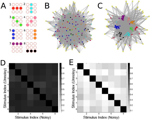 Clustering and decorrelation of representations.(A–C) Discrete input patterns give rise to clusters in the functional connectivity of the WTA network. (A) Input stimuli used in the learning process. Filled and empty spheres indicate strongly and weakly active populations, respectively. (B,C) Visualization of the network structure before and after learning. Strongly-coupled neurons are drawn close together; excitatory synaptic connections are indicated by grey links. Excitatory neurons are coloured according to their preferred input pattern (colours in A); inhibitory neurons (square) are drawn in yellow. (B) Before learning, no clustering of synaptic connections is present. (C) After learning, neurons with the same preferred stimulus are strongly interconnected. See S2 Video. (D) Before learning, the response of the network is similar across all stimuli. Shown is the scalar product between the vectors of neuronal responses to pairs of stimuli . The noise was added in order to assess the sensitivity of the network's activity to a perturbation of the input signal (see text). The high values and uniformity of scalar products in (D) indicates that network responses poorly distinguish between stimuli. (E) After learning, responses to noisy stimulus presentations are highly similar (high values of scalar product; black diagonal), whereas responses to different stimuli are decorrelated (low values of scalar product; light shading).