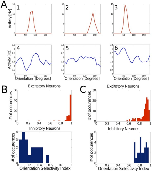 Excitatory neurons are strongly tuned; inhibitory neurons are poorly tuned.Tuning properties of excitatory and inhibitory neurons. (A) Representative tuning curves for 3 excitatory (red, 1-3) and 3 inhibitory (blue, 4-6) neurons in a WTA network after the learning process. Excitatory neurons exhibit strong and narrowly tuned preference for certain inputs, in contrast to inhibitory neurons. (B) Distribution of the orientation selectivity index (OSI) across all excitatory and inhibitory neurons in a WTA network, demonstrating the discrepancy of tuning on a population level. (C) Simulation of the same learning rule for synapses onto excitatory as well as inhibitory neurons yields orientation-tuned neurons in both populations.