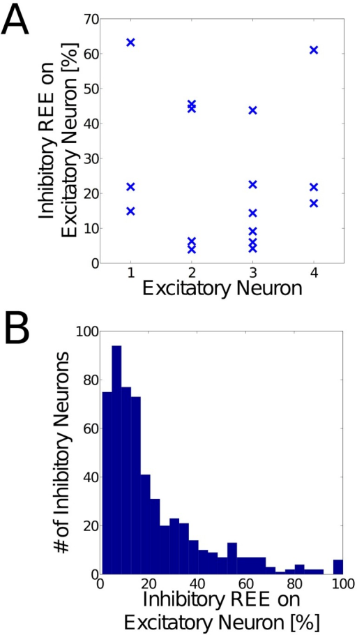 Inhibition of excitatory neurons.Excitatory neurons are predominantly inhibited by subsets of the inhibitory neurons that project to them. (A) Representative examples of the inhibition to excitatory neurons in a learned WTA network, during presentation of a stimulus. The vertical axis indicates the percentage of the total inhibitory REE (see definition of REE in text) that an individual inhibitory neuron delivers to this particular excitatory neuron. Few (usually 2 or 3) inhibitory neurons provide the major part of the inhibition. (B) Histogram of all the REE contributions (in %) from inhibitory neurons, across all excitatory neurons in the WTA network. The distribution shows that few inhibitory neurons provide the major part of the inhibitory REE on an excitatory neuron. This specialization is a result of the BCM learning rule, which is followed also by inhibitory synapses onto excitatory neurons.