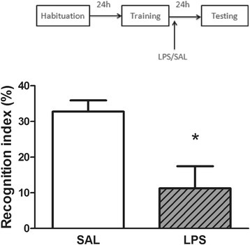Effects of LPS on memory. Post-training administration of LPS (250 μg/kg, intraperitoneally) decreased the recognition index in the object recognition task. Data are expressed as mean ± standard error of the mean for 8 animals in each group. *P < 0.01 compared with saline group (Student's t test). LPS, lipopolysaccharide; SAL, saline.