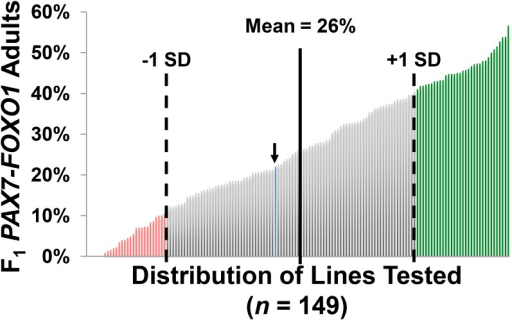 Distribution of the genetic lines tested in the PAX7-FOXO1 Screen. Shown is the plotted distribution of the tested deficiencies and the average baseline wild-type (w1118) control score (blue line, noted by the arrow) based on the percentage of F1 PAX7-FOXO1 males observed for each line examined. The Mean F1 male percentage for the screen was 26%, with a calculated SD of 15%. Suppressors (green) rank one SD above the mean, whereas enhancers (red) rank one SD below the mean.
