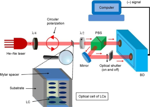 Schematic for measurement of cell optical birefringence using polarization-sensitive double-port detection.Abbreviations: λ/4, quarter-wave plate; λ/2, half-wave plate; PBS, polarizing beam splitter; BD, balanced detector; LCs, liquid crystals.