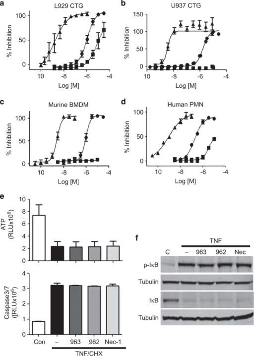 GSK′963A is highly potent in human and mouse cell-based assays and selective for inhibition of necroptosis. (a–d) Dose–response curves for GSK′963, GSK′962 and Nec-1 in cell-based assays. Necroptosis induced with TNF and zVAD in (a) mouse fibrosarcoma L929 cells, (b) human monocytic U937 cells and (c) primary murine bone marrow-derived macrophages was evaluated by measuring cell viability using CellTiter-Glo assay. (d) Primary human neutrophils were stimulated with TNF, zVAD and SMAC mimetic to induce necroptosis. Cell viability was evaluated as in a. The graphs represent combined data from at least three independent experiments. Error bars represent S.D. (e) Cell viability and Caspase 3/7 activity were measured in BMDM treated with TNF and cycloheximide. Cell viability was measured using the CellTiter-Glo assay at 20 h, Caspase 3/7 activity using the Caspase-Glo 3/7 assay at 3 h. GSK′963 and GSK′962 were used at 100 nM and Nec-1 was used at 10 μM. Similar data were generated in four independent experiments. Error bars represent S.D. between two experiments measured on the same plate. (f) Western blot analysis of IκB phosphorylation and degradation in BMDM stimulated with TNF. IκB phosphorylation was evaluated at 5 min and IκB degradation at 15 min. Tubulin was used as a loading control. GSK′963 and GSK′962 were used at 100 nM and Nec-1 was used at 10 μM. Data are representative of experiments from four different animals. =Nec-1, =GSK′962, and =GSK′963. C, control; CHX, cycloheximide.