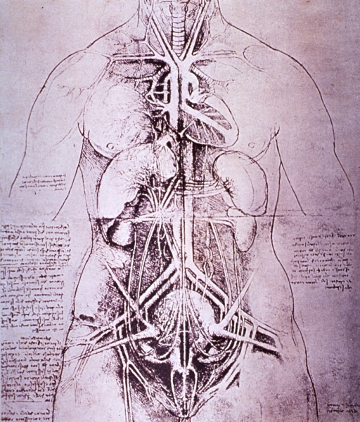 <p>Illustrating various organs and their relative positions within the body.</p>