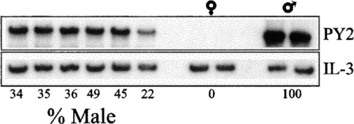 Percentage of male DNA in marrow of individual recipient  female mice determined by Southern blot. Male was taken as 100% and  female as 0%. Loading variability was corrected using an IL-3 probe.