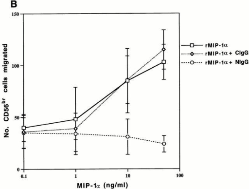 The effects of recombinant MIP-1α on PBMC chemotaxis. (A–C) Results of a representative experiment. (A) Monocyte chemotaxis toward a dilution series of recombinant MIP-1α (rMIP-1α) peaked at a concentration of 10 ng/ml. Addition of a neutralizing anti–MIP-1α IgG (NIgG) returned migration to baseline levels, and a control IgG antibody (CIgG) added at the same concentration had no effect. (B) CD56bright and (C) CD56dim NK cells also responded to recombinant MIP-1α, but their migration did not peak within the range of concentrations tested. Addition of anti–MIP-1α reduced NK cell migration to baseline.