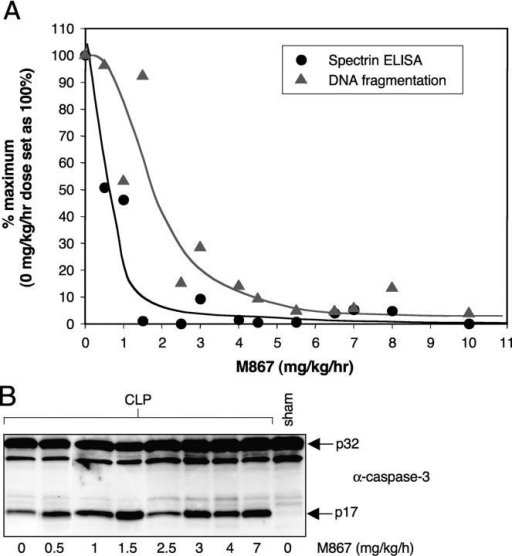Effect of M867 dose titration on caspase-3 cleavage, αII-spectrin cleavage, and DNA fragmentation in CLP-induced septic rats. Rats that underwent CLP surgery were dosed by continuous i.v. infusion of either vehicle (n = 6) or M867 (n = 1 for each dose) for 24 h. (A) Percentage of residual αII-spectrin cleavage (circles) and DNA fragmentation (triangles) in each animal after administration of various doses of M867. Percentages were calculated from the average αII-spectrin and DNA fragmentation values obtained with the vehicle-treated animals. (B) Caspase-3 Western blotting on thymus extracts of animals dosed with M867.
