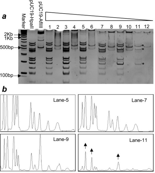 Religation at low concentration lead to non-proportional amplification. (a) Re-digestions of HpaII digested, religated and amplified samples. Religations were done at different concentrations. The concentrations go down in descending order from number 1 to 12. Six different concentrations were chosen i.e. 12 ng/μL, 10 ng/μL, 8 ng/μL, 4 ng/μL, 1 ng/μL, 100 pg/μL. Odd numbers represent the amplified samples redigested with the same enzyme (HpaII) while even numbers represent same samples redigested with a different enzyme (AflIII). (1,2: 12 ng/μL, 3,4: 10 ng/μL, 5,6: 8 ng/μL, 7,8: 4 ng/μL, 9,10: 1 ng/μL, 11,12: 100 pg/μL). The asterisks represent the fragments that are over amplified as compared to others. 10% polyacrylamide gels stained with EB were used for redigested samples. (b) Quantitative scanning of relative band intensities. The arrows shown in the scan of lane-11, corresponding to the asterisks in fig. 3a, represent DNA fragments that are relatively better amplified as compared to others in the same lane.
