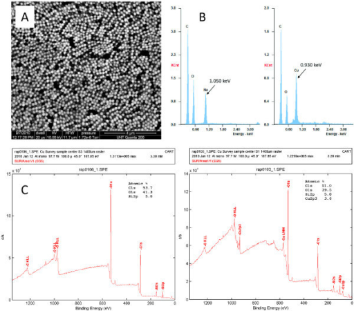 Characterization of CuCNPs. (A) SEM image of CuCNPs, (B) EDX spectra of CNPs before (left) and after (right) addition of Cu, (C) XPS spectra for CuCNPs (right) and control particles containing no Cu (left).