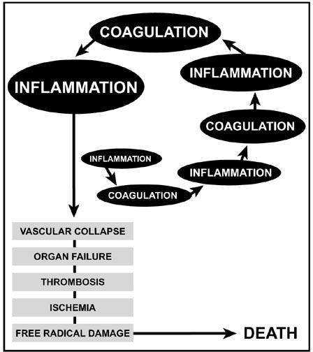 The inflammation-coagulation autoamplification loop. Adapted from Esmon et al [10].