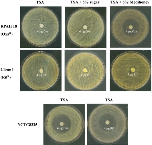 Reversal of oxacillin resistance but not rifampicin resistance in S. aureus by Medihoney.Oxacillin resistant MRSA RPAH18 and rifampicin resistant clone 1 (Fig. 1) were streaked out on TSA plates containing no honey (TSA), 5% sugar solution (sugar), or 5% Medihoney. Inhibition zones around filter discs containing 4 µg rifampicin (rif) or 4 µg oxacillin (oxa) were measured after incubation at 37°C for 24 h.