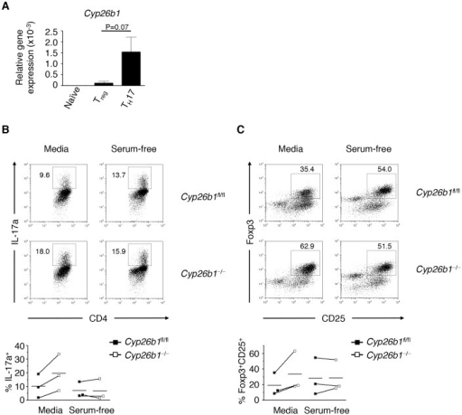 Cyp26b1 limits iTreg and TH17 cell differentiation in vitro.CD4+ T cells were isolated from Cyp26b1fl/fl and Cyp26b1−/− mice and cultured in iTreg cell- or TH17 cell-promoting conditions, in either serum-containing media or in serum-free media. (A) Gene expression of Cyp26b1 (normalized relative to Actb) was measured by qRT-PCR. (B) Frequencies of IL-17a+ TH17 cells and (C) Foxp3+ CD25+ iTreg cells were determined by flow cytometry. Data in (A) represent mean±SEM of 4 independent experiments; Data in (B) and (C) are from one representative experiment of 4 independent experiments.