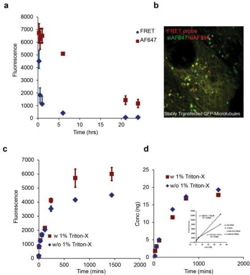 Quantitative analysis for disassembly and recycling of LNPsa. HeLa cells were exposed to LNP with the FRET pair (AF647/AF594 siRNA), washed and replenished with media. Changes in FRET (excitation-561 nm, emission-641 nm) intensity were monitored at different time points using flow cytometery to quantify LNP disassembly. The emission from a single fluorophore (excitation-633 nm, emission-641 nm) was used to measure intracellular siRNA at these time points. b. Cellular uptake of FRET probe-LNP (siAF647/siAF594, 3hrs) was imaged in stably transfected GFP-tubulin cells 1 hour post incubation c. siAF647-LNP was pulsed for 3 hrs, washed and incubated with fresh media to remove non internalized particles. Media was removed at multiple time points and analyzed using a fluorescent reader to determine amount recycled. 1% Triton-X was later added (red curve) to the media and fluorescence was re-measured. d. Amount of siRNA was obtained from fluorescence values from (c) that were extrapolated using the standard curve (inset).