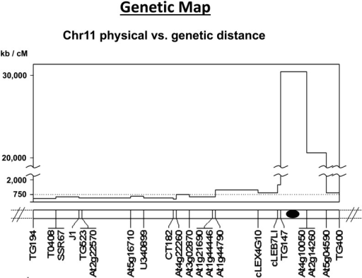 Estimated physical distance (based on the S. lycopersicum reference genome v2.50) vs. genetic distance in a chromosome 11 region introgressed from S. habrochaites. Vertical axis indicates the estimated ratio of physical distance to genetic distance for each marker interval on the linkage map for this region. Black oval indicates approximate centromere position.