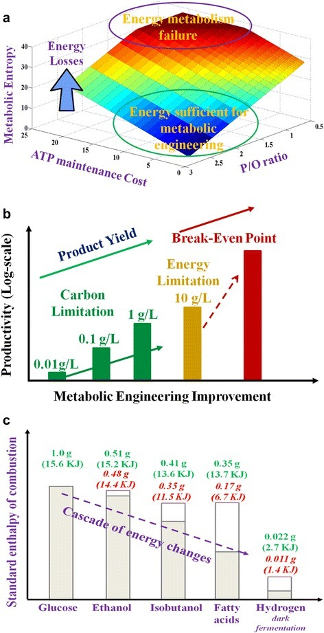 Energy fitness and productivities in microbial cell factories. a: The trend of metabolic entropy changes (unit: ATP generation per glucose). In optimal metabolism, one mole glucose generates 38 ATP for biosynthesis. Under constraints of P/O ratios and maintenance loss, less ATP can be generated (increase of metabolic entropy). b: The transition from carbon limitation to energy limitation with the increase of product yield. In many cases, the energy limitation prevents strains from achieving the yield and titer above break-even point. c: Cascade of energy changes (Heat of combustion) during biofuel synthesis from glucose. Energy was calculated based on stoichiometry yields (green text, entire bar) and the practical yields (red text, grey bar). Reported yields: ethanol -- 96% of theoretical yield [29], isobutanol -- 85% of theoretical yield [37], fatty acid --50% of theoretical yield [35], and H2 (dark fermentation) -- 50% of theoretical yield [38].