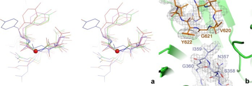 a) Details of the conformation of the glycyl radical and finger loops in the active site of tmNrdD. The two loops are shown as sticks with the surrounding β-barrel as a cartoon. A 2m/Fo/-D/Fc/ omit electron density map is shown contoured at 1.0 σ. The map was calculated by omitting residues 351–364 and 618–623 from the model followed by three macrocycles of torsion angle molecular dynamics in phenix.refine with default parameters. b) Cross-eyed stereo view comparing the glycyl radical loops in several representative glycyl radical enzymes. tmNrdD is shown in red, T4NrdD in blue, pyruvate formate lyase in magenta, glycerol dehydratase in green and 4-hydroxyphenylacetate decarboxylase in orange. The Cα atom of Gly621 in tmNrdD is indicated with a red sphere.
