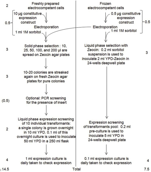 Comparative flowchart of Invitrogen (left) and our (right) protocol for expressing recombinant proteins in P. pastoris. In this example, constitutive expression was chosen. Numbers on the left and on the right are the estimated number of days required by the considered step, with their sum (total) at the bottom.