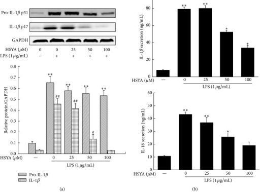 HSYA inhibits LPS-induced IL-1β and IL-18 secretion. RAW264.7 cells were pretreated with HSYA at indicated doses (25, 50, and 100 μM) for 3 h and then treated with 1 μg/mL LPS for 12 h (Western Blot) or 24 h (ELISA). (a) The pro-IL-1β, IL-1β, and GAPDH proteins expressions were analyzed by Western Blotting. (b) The IL-1β and IL-18 secretion were measured by ELISA. Data represent the mean ± SEM of three independent experiments and differences between mean values were assessed by one-way ANOVA. ∗P < 0.05, ∗∗P < 0.01, #P < 0.05, and ##P < 0.01 indicate significant differences compared with the control group of indicated proteins, respectively.