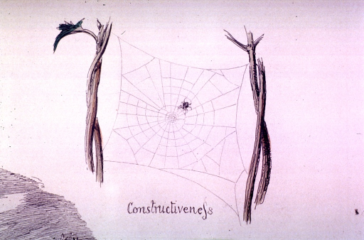<p>A spider is weaving a web.</p>
