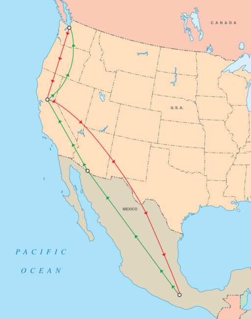 Map of Migration RouteThis map shows the route of migration field research followed by the anthropologist, from the Skagit Valley of Washington state to the central Valley of California, the mountains of Oaxaca, Mexico, the Arizona borderlands, and then back to central California and Washington state.(Illustration: Natalie Davis)