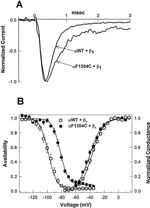 Mutation F1304C destabilizes fast inactivation. (A)  Na+ currents were elicited from excised inside-out macropatches  by depolarization to −20 mV from a holding potential of −120  mV. Averages of two current traces each for WT and mutant  F1304C are shown normalized to peak amplitude and superimposed. Mutant channels display a slowed current decay and a  greater fraction of persistent current. (B) Voltage dependence of  steady state fast inactivation, h∞•(V), in response to a 200-ms  prepulse, is right shifted for F1304C (V1/2 = −81.6 ± 1.3 mV,  slope = 5.5 ± 0.5, n = 9), compared with WT (V1/2 = −98.3 ± 1.9,  slope = 5.7 ± 0.3, n = 12). G(V), computed as peak INa/(V − Erev),  is similar for WT (n = 12) and F1304C (n = 9). These data are  consistent with a destabilization of fast inactivation caused by substitution of cysteine for phenylalanine at site 1304.