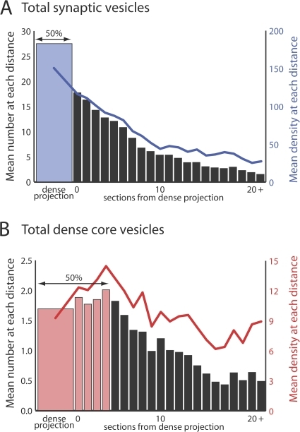 Dense core vesicles do not cluster at active zones. Each graph shows the mean number of synaptic or dense core vesicles per neuronal profile at a given number of sections from the dense projection. Colored bars show the number of profiles required to include 50% of the total number of vesicles. Lines show the vesicle density in units of vesicles per square micrometer.