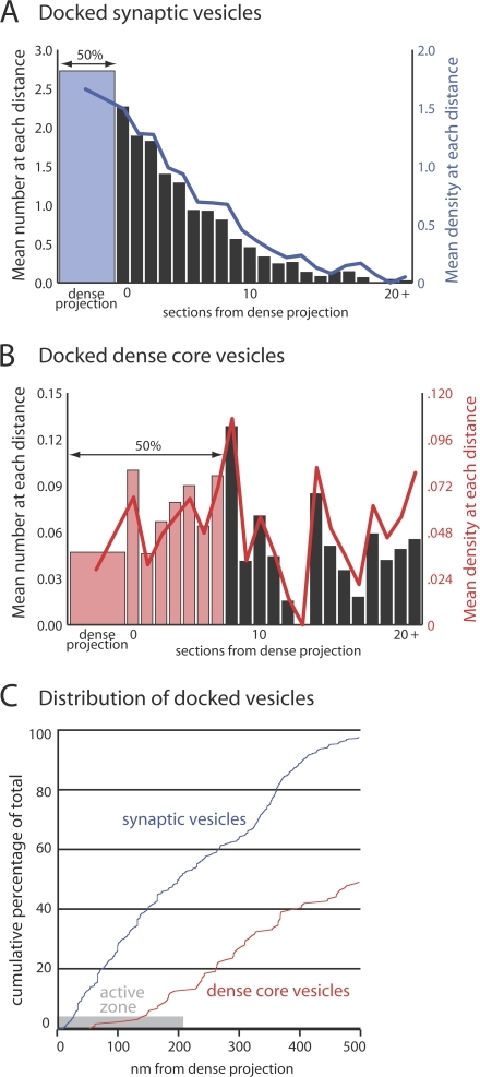 Docked dense core vesicles are excluded from active zones. (A and B) Each graph shows the mean number of docked synaptic or dense core vesicles per profile at a given number of sections from the dense projection. Colored bars show the number of profiles required to include 50% of the total number of docked vesicles. Lines show the docked vesicle density in units of vesicles per micrometer. (C) Cumulative probability of vesicle docking relative to distance from the dense projection. The active zone where synaptic vesicles dock is roughly 210 nm in radius (Hammarlund et al., 2007).