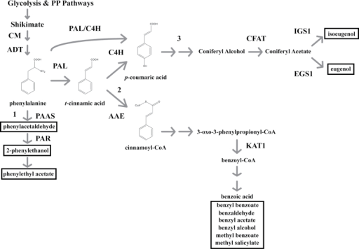 A schematic representation of the FVBP pathway in MD. G | Open-i on