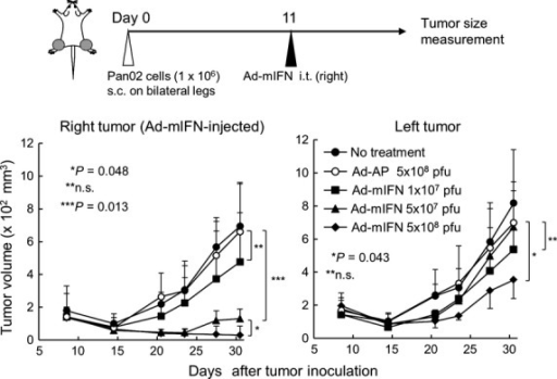 Adenovirus-mediated intratumoral inter-feron (IFN)-α gene transfer induces a systemic antitumor effect. Pan02 cells were inoculated on both legs in C57BL/6 mice, and 11 days later various amounts (1 × 107, 5 × 107, 5 × 108 PFU) of Ad-mIFN or Ad-AP were injected into the subcutaneous tumor on the right leg (n = 4). Data are representative of two separate experiments with similar results.