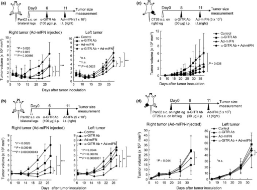 Anti-glucocorticoid induced TNF receptor (GITR) monoclonal antibody (mAb) enhances the antitumor immunity of intratumoral interferon (IFN)-α gene transfer. Data are representative of at least two separate experiments with similar results. (a) Growth suppression of subcutaneous tumors by anti-GITR mAb and a lower dose of Ad-mIFN. Pan02 cells were inoculated on both legs in C57BL/6 mice. The 100 μg of GITR mAb was intrapertioneally injected once at day 6, and then 1 × 107 PFU of Ad-mIFN or Ad-AP was injected once into the tumors at day 11 (n = 8). (b) Antitumor effect by anti-GITR mAb and a higher dose of Ad-mIFN. Pan02 cells were inoculated on both legs in C57BL/6 mice. The 100 μg of GITR mAb was intrapertioneally injected once at day 6, and then 5 × 107 PFU of Ad-mIFN or Ad-AP was injected once into the tumors at day 11 (n = 10). (c) Growth suppression of CT26 subcutaneous tumors by anti-GITR mAb and Ad-mIFN. CT26 cells were inoculated on right legs in BALB/c mice. The 30 μg of GITR mAb was intrepertioneally injected once at day 8, and then 3 × 107 PFU of Ad-mIFN or Ad-AP were injected once into the tumors at day 11 (n = 9). (d) Growth of different tumors by a combination therapy. Pan02 cells were inoculated on right legs and CT26 cells were inoculated on left legs in (C57BL/6 × BALB/c) F1 mice. The 30 μg of anti-GITR mAb antibody was intraperitoneally injected into the mice at day 6, and 5 × 107 PFU of Ad-mIFN was injected into the right Pan02 tumors at day 11.