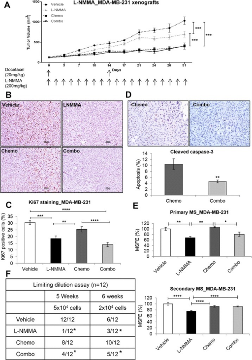 In vivoeffects of L-NMMA in MDA-MB-231 xenografts. (A) Tumor volume of MDA-MB-231 breast xenografts (n = 10 per group) treated with vehicle, L-NMMA, docetaxel, and combination. (B) Illustrative images of Ki67 staining in the vehicle, L-NMMA, docetaxel, and combination groups. Original optical objective: 10×. Counterstain: hematoxylin. (C) Cell proliferation of tumor xenografts with Ki67 immunostaining. (D) Nuclear cleaved caspase-3 staining in the chemo and combo groups. (E) Primary and secondary mammosphere of breast cancer cells isolated from tumor tissue. (F) Tumor-initiating capacity of tumor cells. Results were normalized to vehicle. For proliferation and apoptosis, 1,000 cells were counted from 10 different fields, and the percentage was determined. Data are presented as mean ± standard error of the mean. *P <0.05, **P <0.01, ***P <0.001, ****P <0.0001. L-NMMA, NG-monomethyl-L-arginine; MSFE, mammosphere-forming efficiency.