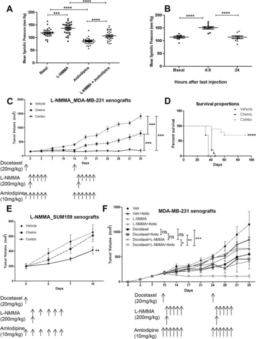 Clinically relevant dose regimen of L-NMMA in orthotopic mouse models of triple-negative breast cancer. (A) Mean systolic pressure of mice (n = 5) giving one cycle of the dose rate proposed in this study. (B) Mean systolic pressure of mice 30 minutes and 24 hours after the last injection of one cycle treatment (n = 5). (C) Tumor volume of MDA-MB-231 xenografts (n = 10 per group) treated with vehicle, docetaxel, and combination (docetaxel + amlodipine + L-NMMA). (D) Kaplan-Meier survival curve of vehicle-, chemotherapy-, and combo-treated MDA-MB-231 xenograft-bearing mice. (E) Tumor volume of SUM159 xenografts (n = 10 per group) treated with vehicle, docetaxel, and combination. (F) Effects of amlodipine on tumor volume in MDA-MB-231 xenografts (n = 5 per group). Data are presented as mean ± standard error of the mean. *P <0.05, **P <0.01, ***P <0.001, ****P <0.0001. L-NMMA, NG-monomethyl-L-arginine; ns, not significant.