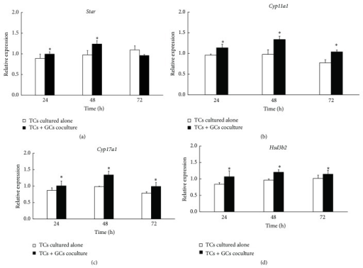 Effect of granulosa cells on mRNA expression of genes encoding steroidogenic enzymes (Star, Cyp11a1, Cyp17a1, and Hsd3b2) in TCs. After TCs were cultured up to 72 h, the expressions of Star, Cyp11a1, Cyp17a1, and Hsd3b2 were measured by quantitative real-time PCR (GAPDH as internal control). Expressions of all these genes were increased in the cocultured model compared with TCs cultured alone. Data were the mean ± SEM of three independent experiments where all the samples were repeated in thrice. The asterisk showed the statistically significant difference.   ∗P < 0.05.