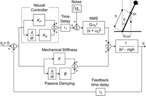 Block diagram of the model used in the simulation study. The feedback model included the neural controller with transmission delays (τ1, transmission time delay and τ2, feedback time delay) and the neuromusculoskeletal (NMS) torque-generation process, as well as mechanical stiffness (K) and passive damping (B) to control the inverted pendulum. The inverted pendulum was used to describe the mechanics of the quiet sitting. m is the moving mass, h is the height of center of mass (COM), and I is the moment of inertia of the inverted pendulum. KP and KD, are proportional and derivative gains of the proportional-derivative (PD) controller, respectively, used to emulate the neural controller. An inverted pendulum model of quiet sitting is represented, where yCOP is the center of pressure (COP) position, θ is the sway angle, and g is the acceleration of gravity. Gaussian random noise was inserted into the system to drive the simulations